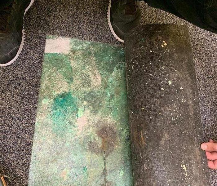 carpet pulled up with mold underneath.