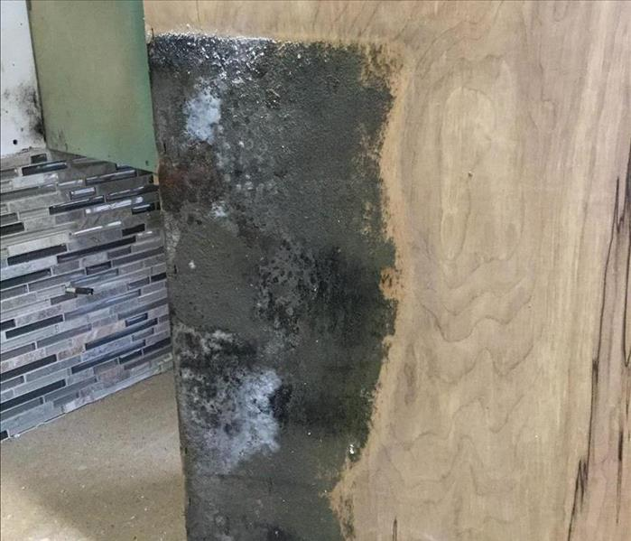 Moldy piece of wood.